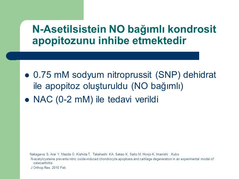 N-Asetilsistein NO bağımlı kondrosit apopitozunu inhibe etmektedir