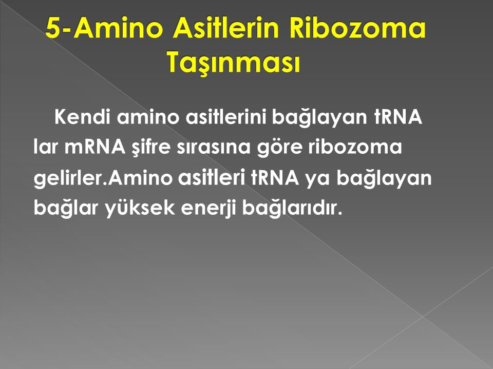 5-Amino Asitlerin Ribozoma Taşınması