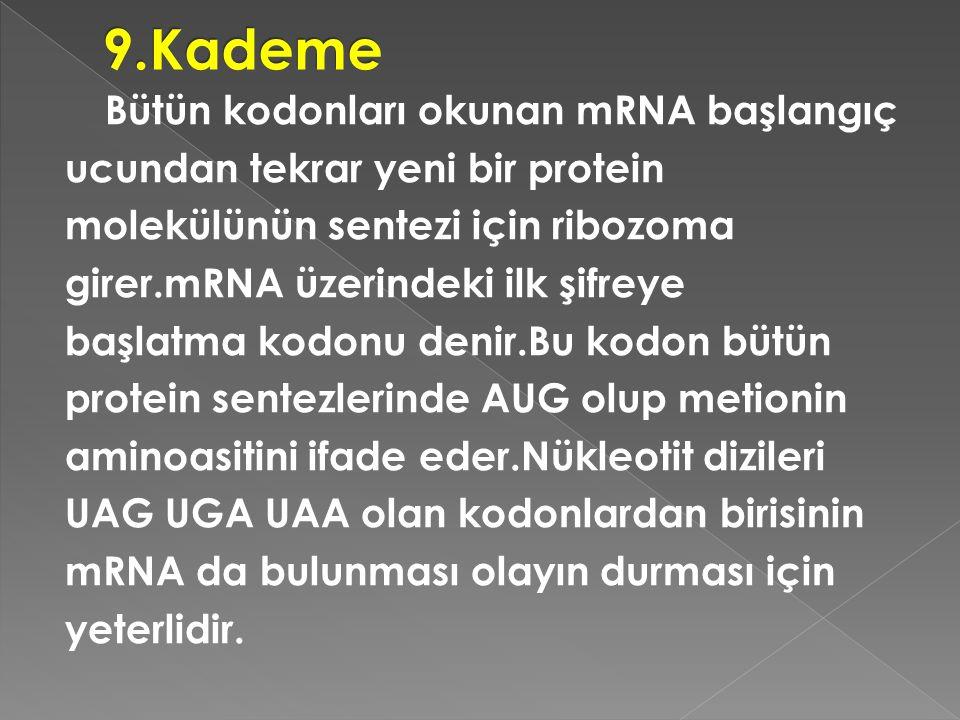 9.Kademe
