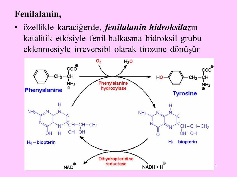 Fenilalanin,