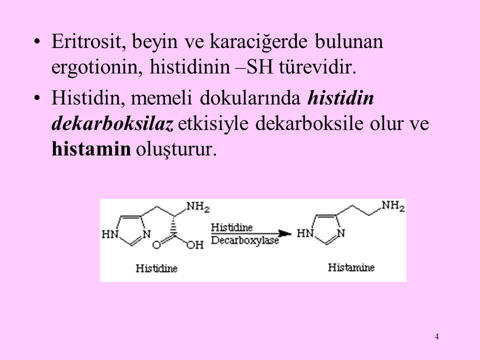 Eritrosit, beyin ve karaciğerde bulunan ergotionin, histidinin –SH türevidir.