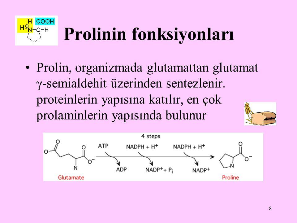 Prolinin fonksiyonları