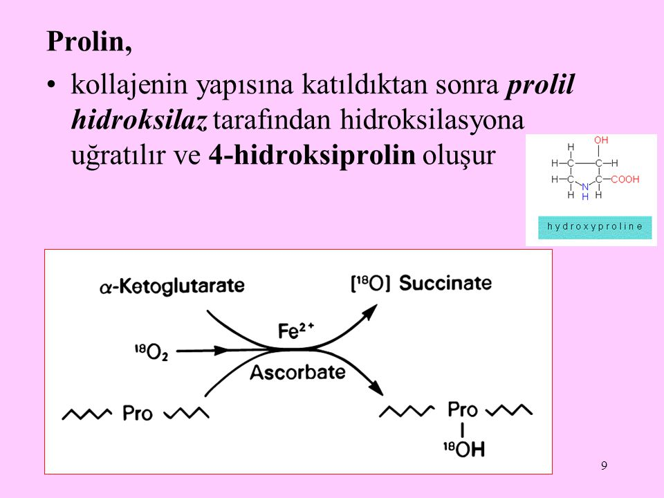 Prolin, kollajenin yapısına katıldıktan sonra prolil hidroksilaz tarafından hidroksilasyona uğratılır ve 4-hidroksiprolin oluşur.