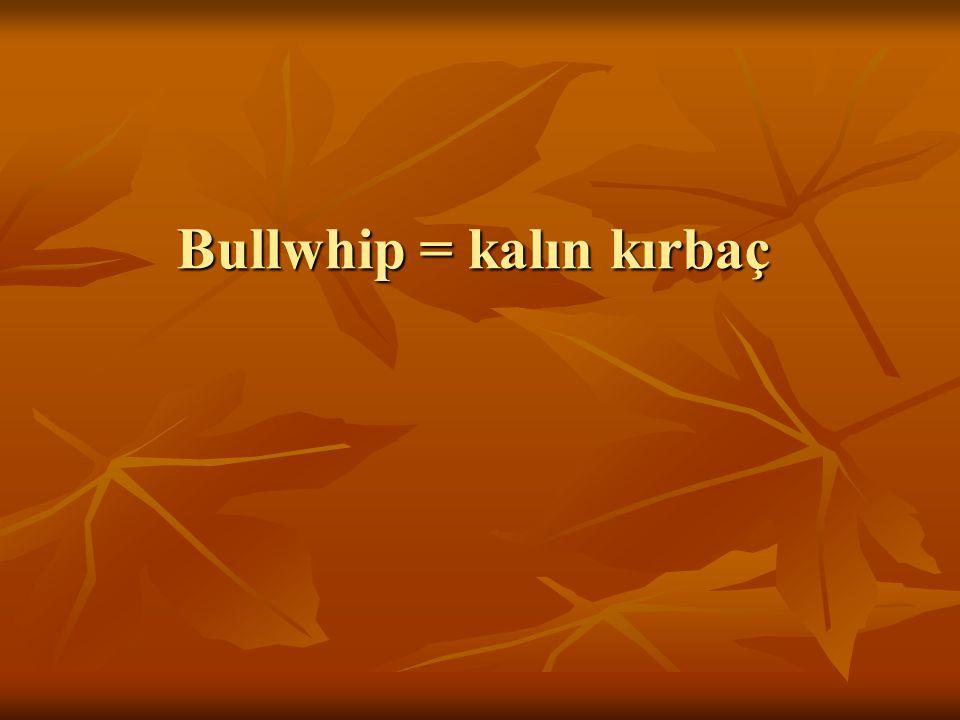 Bullwhip = kalın kırbaç