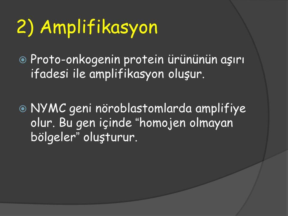 2) Amplifikasyon Proto-onkogenin protein ürününün aşırı ifadesi ile amplifikasyon oluşur.