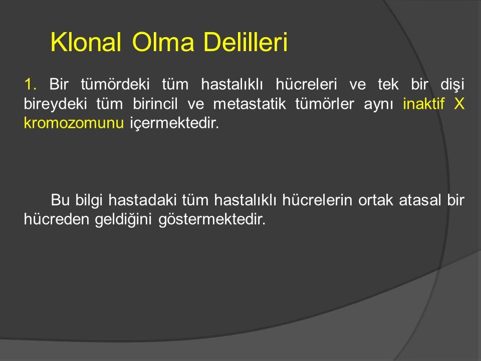 Klonal Olma Delilleri