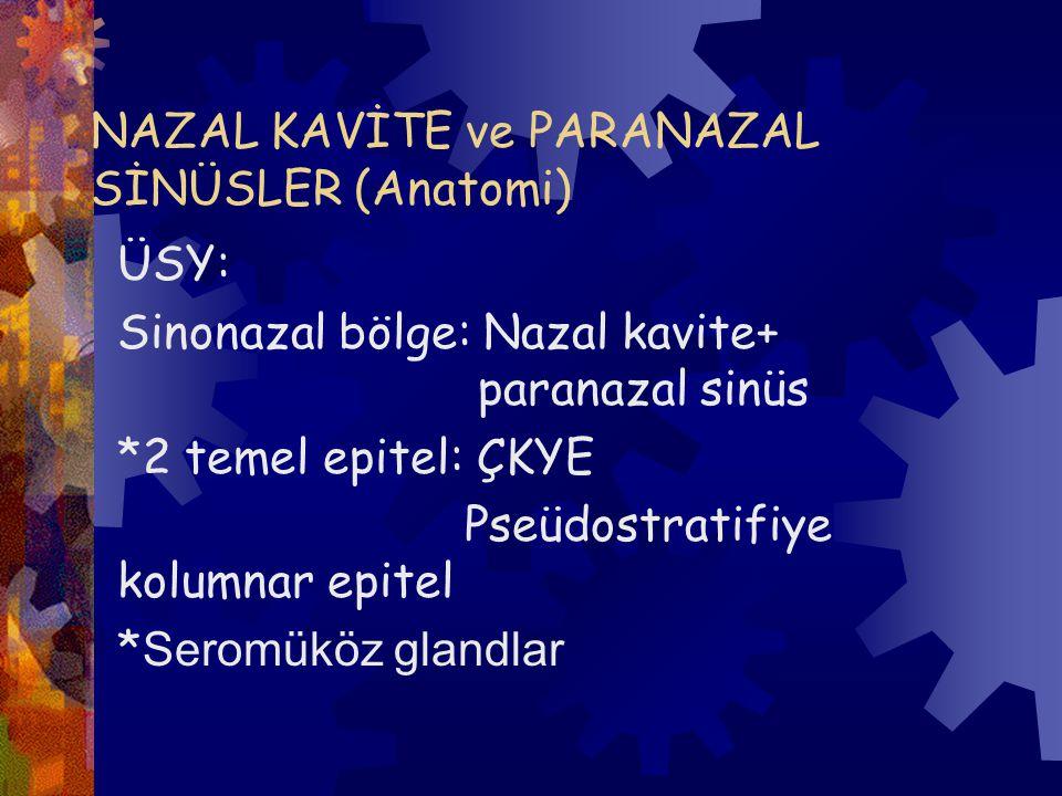 NAZAL KAVİTE ve PARANAZAL SİNÜSLER (Anatomi)