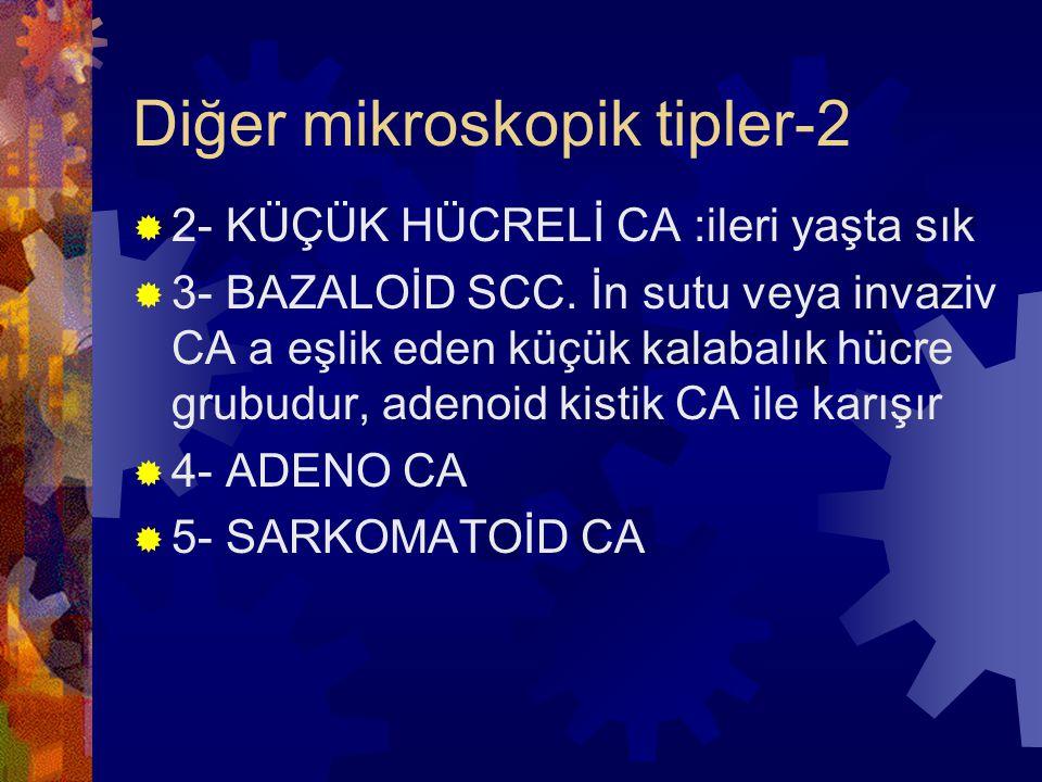 Diğer mikroskopik tipler-2