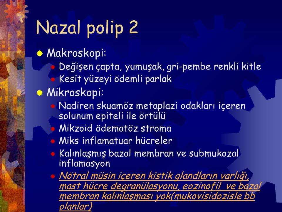 Nazal polip 2 Makroskopi: Mikroskopi: