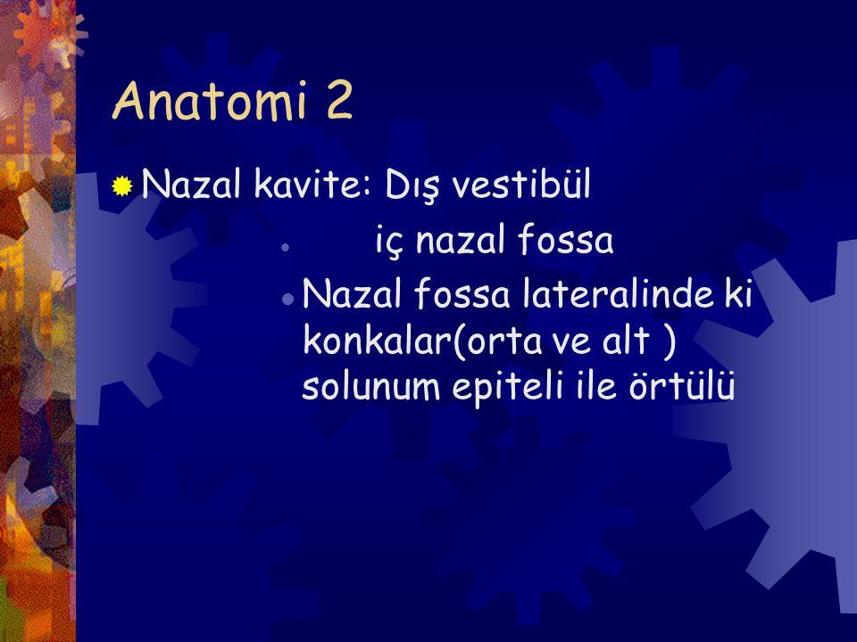 Anatomi 2 Nazal kavite: Dış vestibül