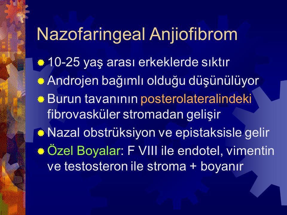 Nazofaringeal Anjiofibrom