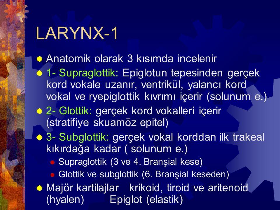 LARYNX-1 Anatomik olarak 3 kısımda incelenir