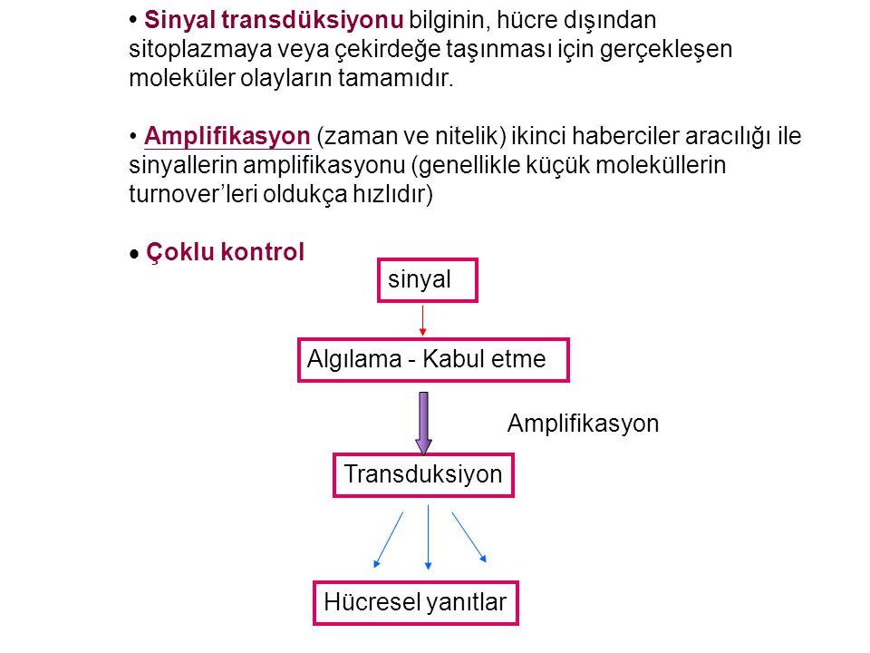 • Sinyal transdüksiyonu bilginin, hücre dışından sitoplazmaya veya çekirdeğe taşınması için gerçekleşen moleküler olayların tamamıdır.