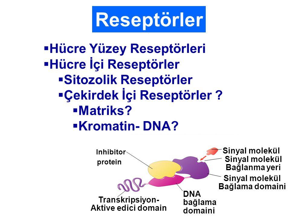 Reseptörler Hücre Yüzey Reseptörleri Hücre İçi Reseptörler