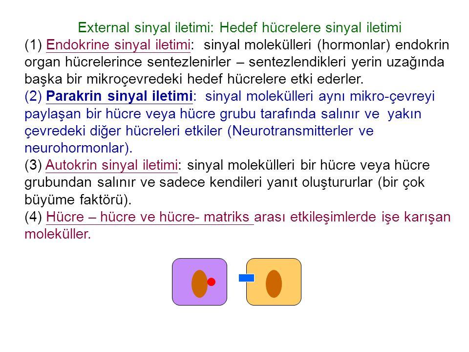 External sinyal iletimi: Hedef hücrelere sinyal iletimi