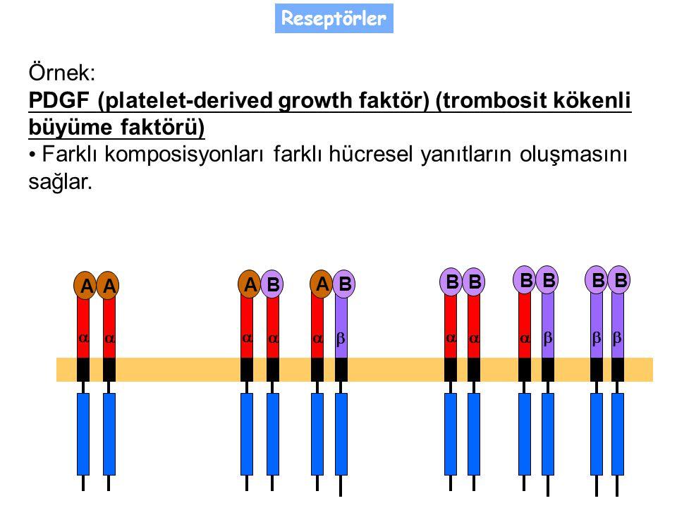 • Farklı komposisyonları farklı hücresel yanıtların oluşmasını sağlar.