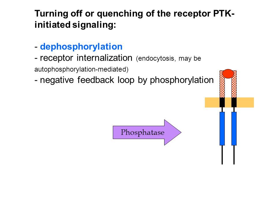 Turning off or quenching of the receptor PTK-initiated signaling: