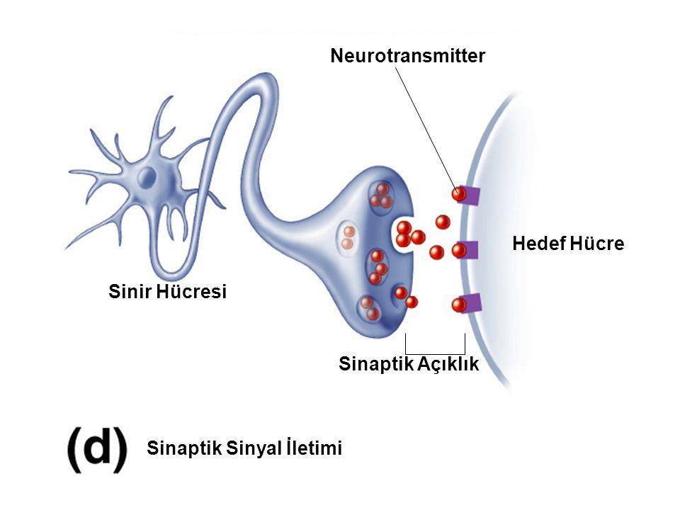 Sinaptik Sinyal İletimi