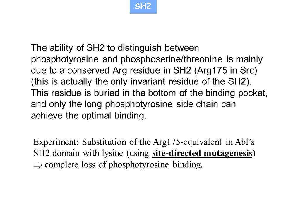  complete loss of phosphotyrosine binding.