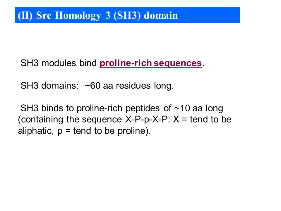 (II) Src Homology 3 (SH3) domain