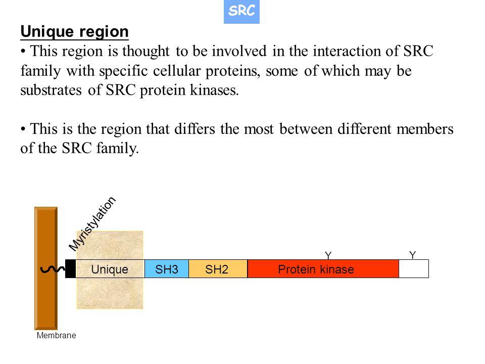 SRC Unique region.