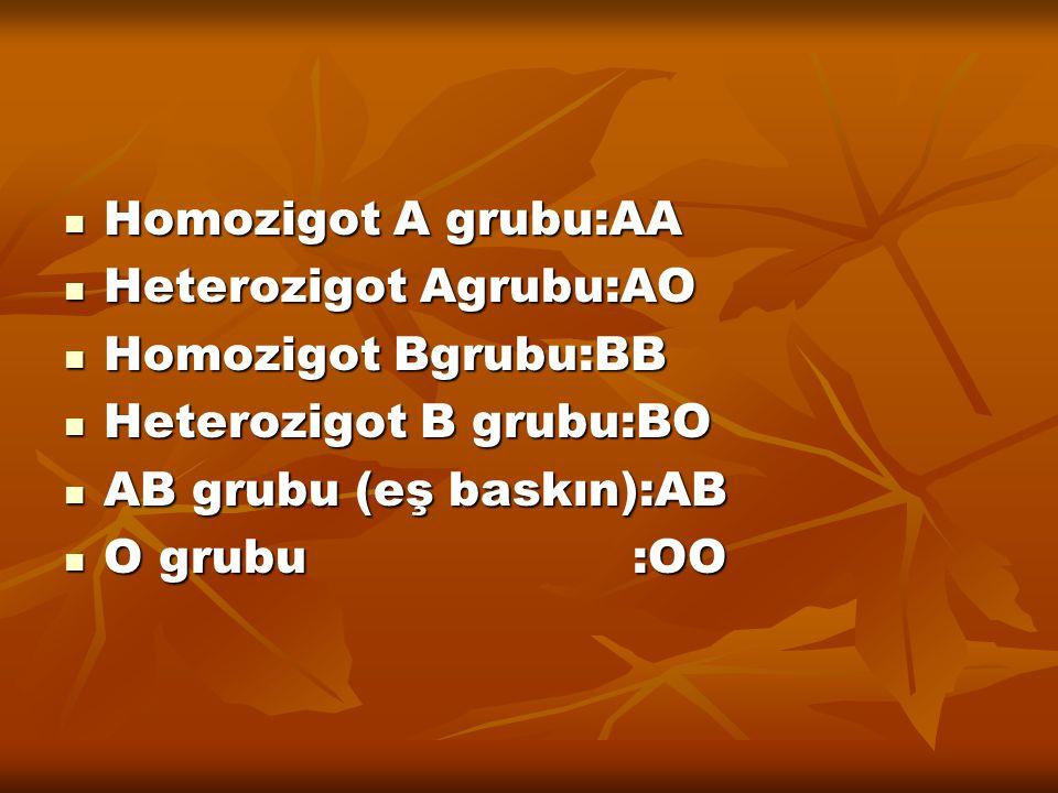 Homozigot A grubu:AA Heterozigot Agrubu:AO. Homozigot Bgrubu:BB. Heterozigot B grubu:BO. AB grubu (eş baskın):AB.