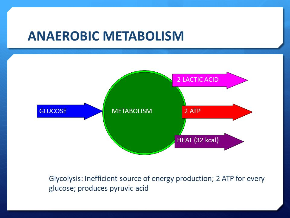 ANAEROBIC METABOLISM GLUCOSE. METABOLISM. 2 LACTIC ACID. 2 ATP. HEAT (32 kcal)