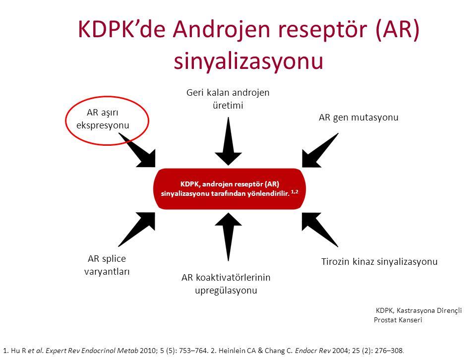KDPK'de Androjen reseptör (AR) sinyalizasyonu