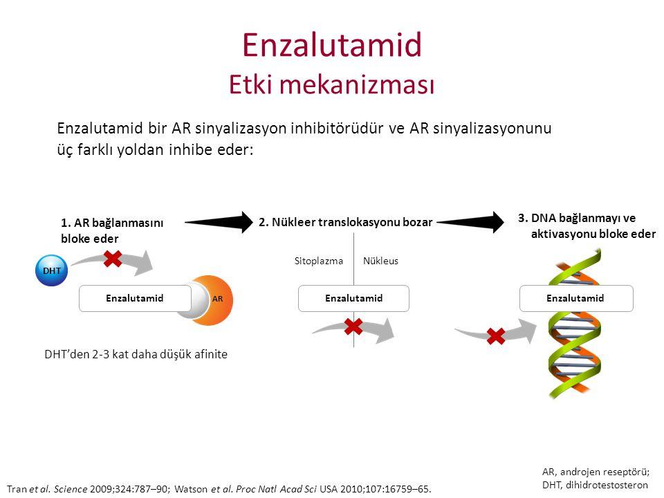 Enzalutamid Etki mekanizması