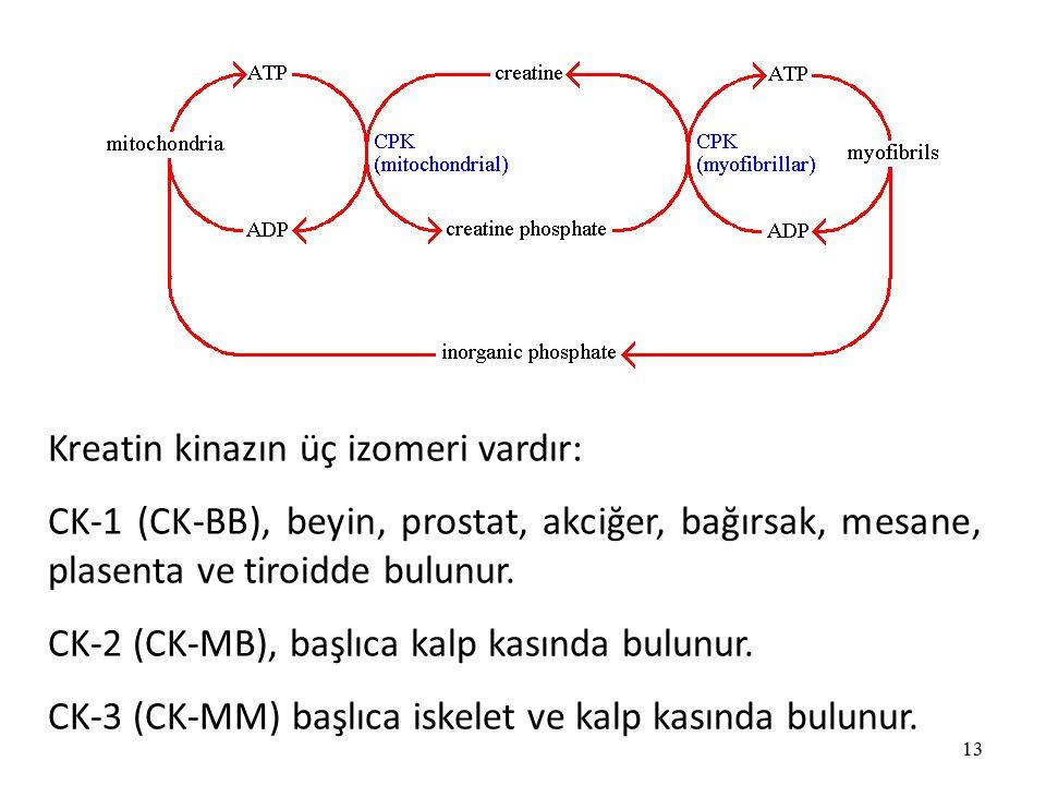 Kreatin kinazın üç izomeri vardır: