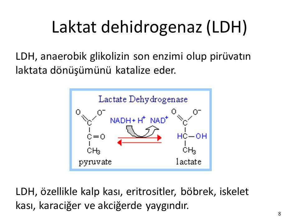 Laktat dehidrogenaz (LDH)