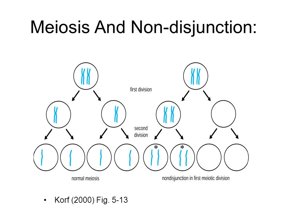 Meiosis And Non-disjunction: