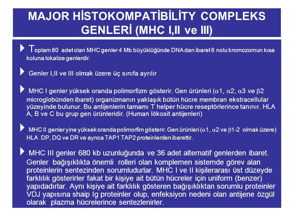 MAJOR HİSTOKOMPATİBİLİTY COMPLEKS GENLERİ (MHC I,II ve III)