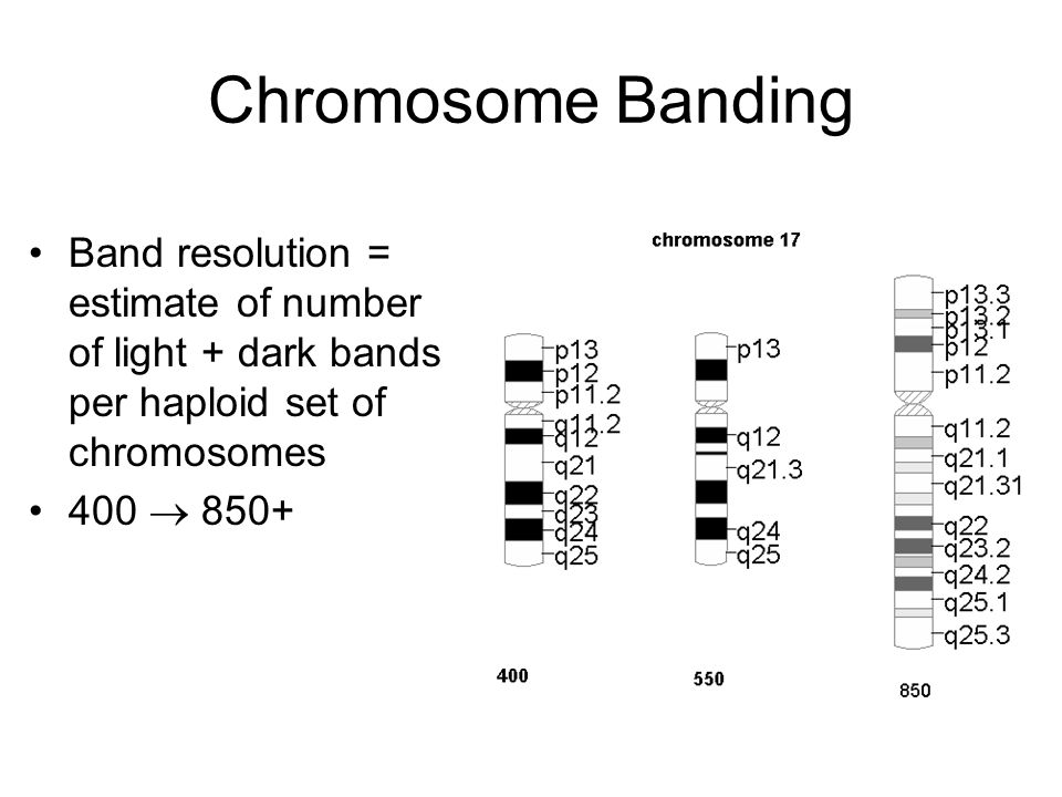 Chromosome Banding Band resolution = estimate of number of light + dark bands per haploid set of chromosomes.
