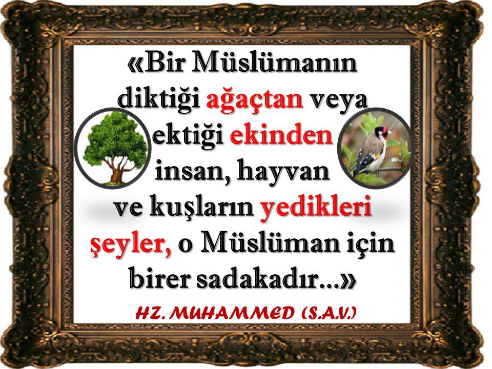 «Bir Müslümanın diktiği ağaçtan veya ektiği ekinden insan, hayvan ve kuşların yedikleri şeyler, o Müslüman için birer sadakadır...»