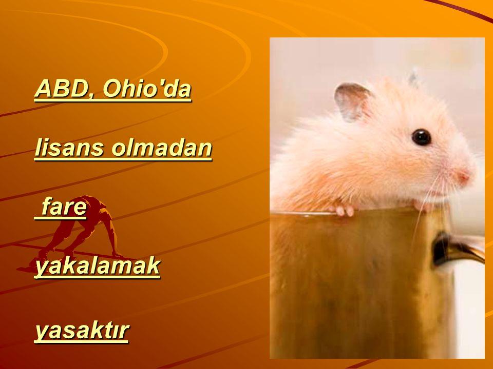 ABD, Ohio da lisans olmadan fare yakalamak yasaktır