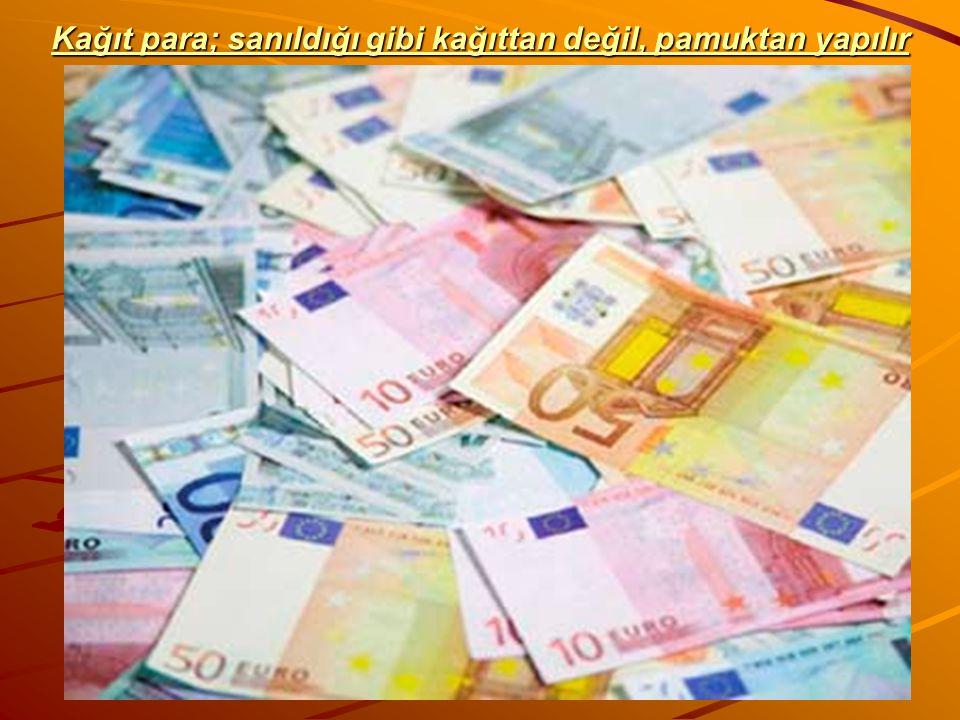 Kağıt para; sanıldığı gibi kağıttan değil, pamuktan yapılır