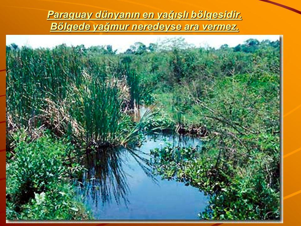 Paraguay dünyanın en yağışlı bölgesidir