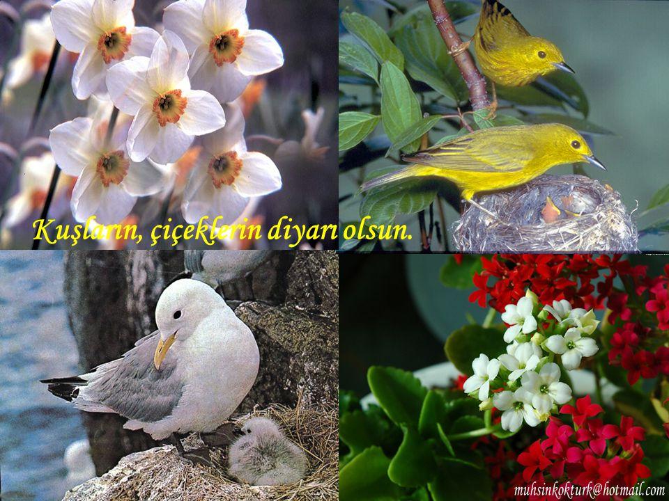 Kuşların, çiçeklerin diyarı olsun.