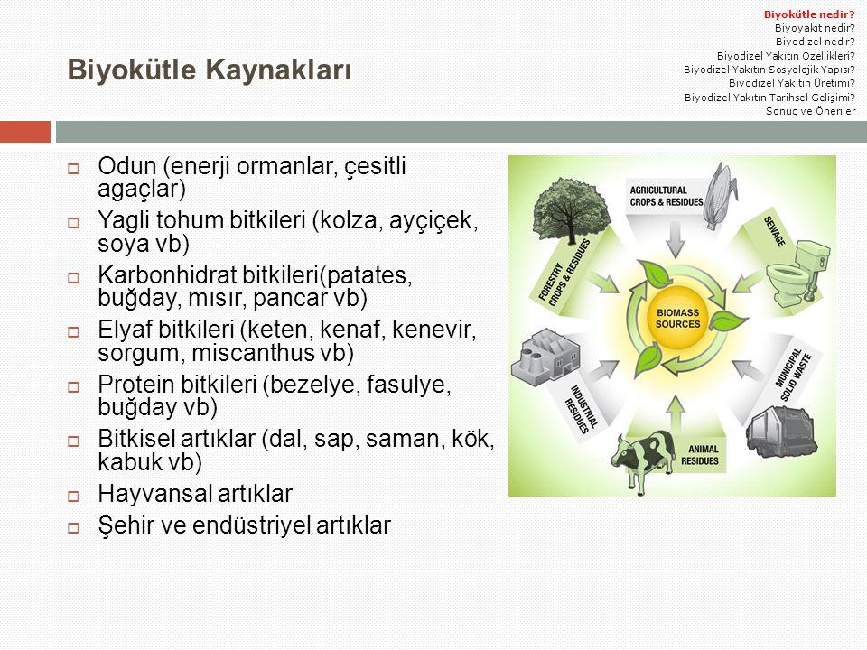 Biyokütle Kaynakları Odun (enerji ormanlar, çesitli agaçlar)