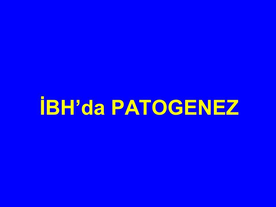 İBH'da PATOGENEZ