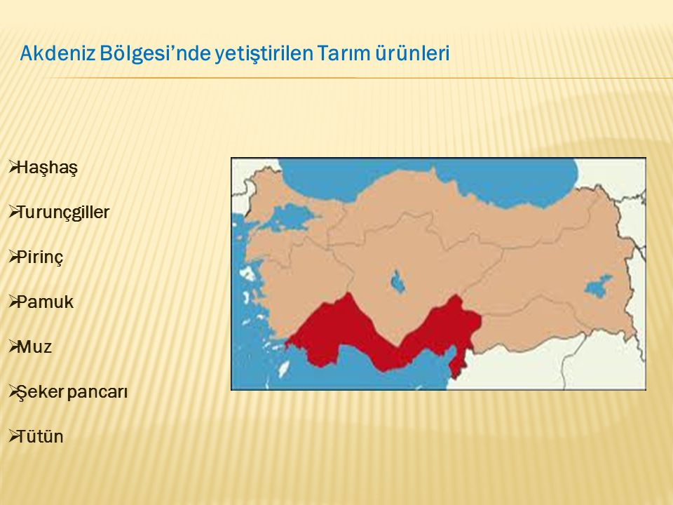 Akdeniz Bölgesi'nde yetiştirilen Tarım ürünleri