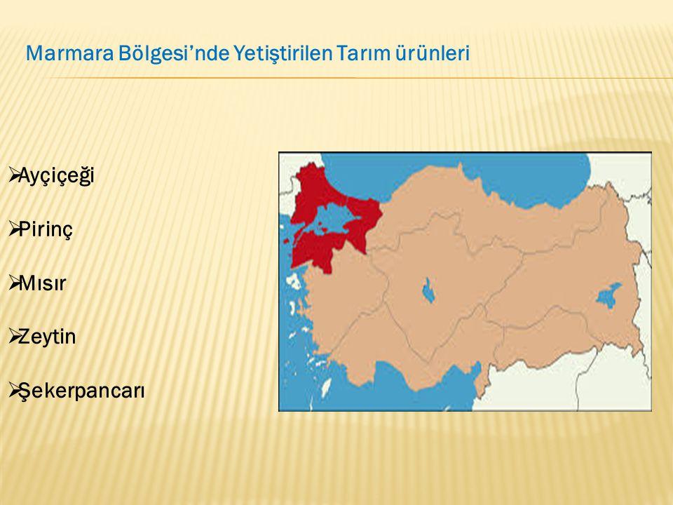 Marmara Bölgesi'nde Yetiştirilen Tarım ürünleri