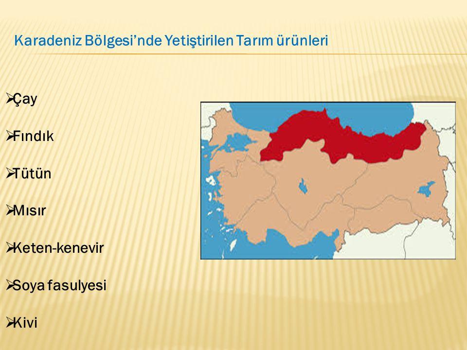 Karadeniz Bölgesi'nde Yetiştirilen Tarım ürünleri