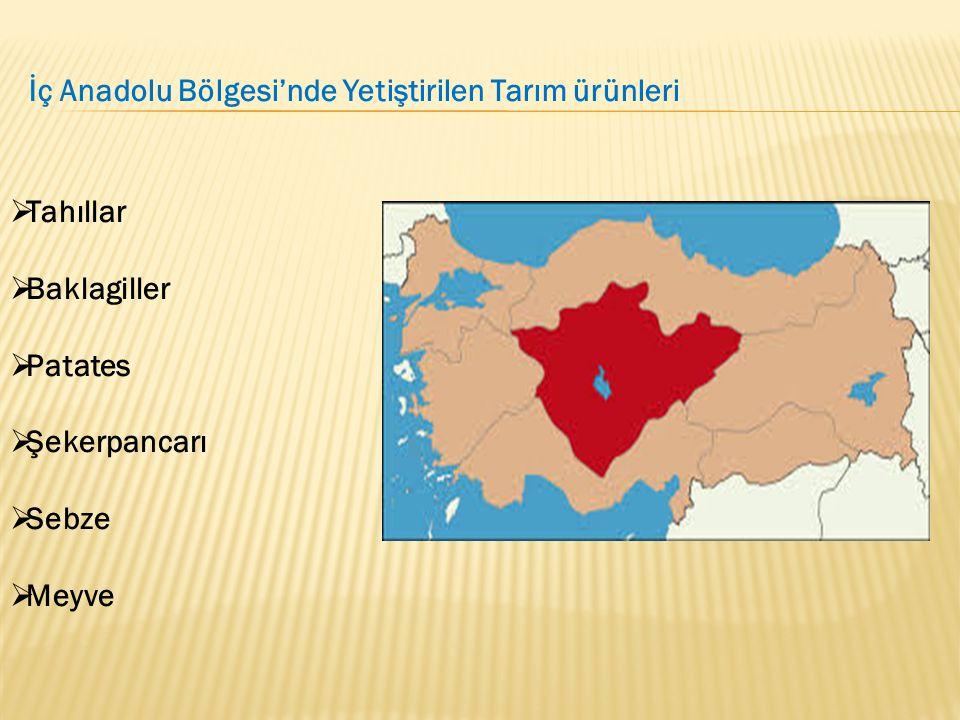 İç Anadolu Bölgesi'nde Yetiştirilen Tarım ürünleri