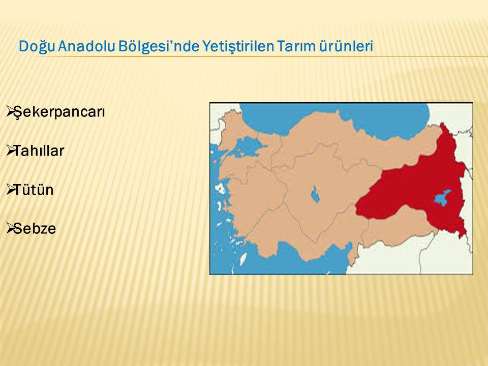 Doğu Anadolu Bölgesi'nde Yetiştirilen Tarım ürünleri