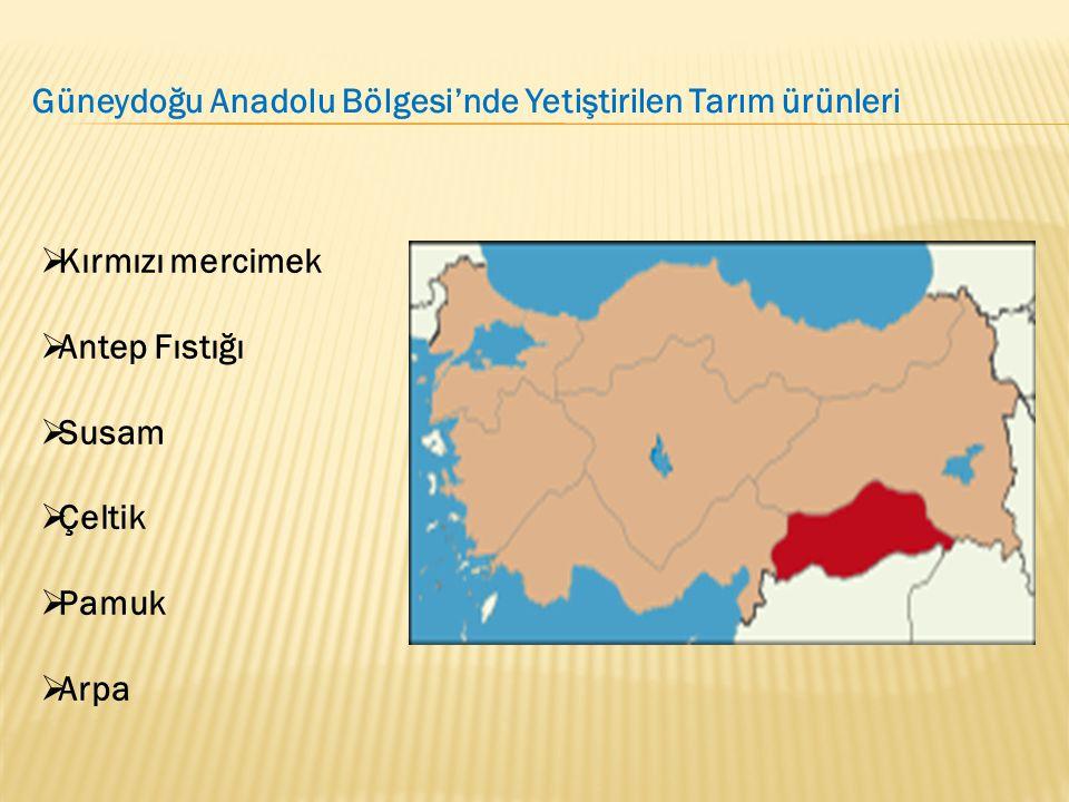 Güneydoğu Anadolu Bölgesi'nde Yetiştirilen Tarım ürünleri