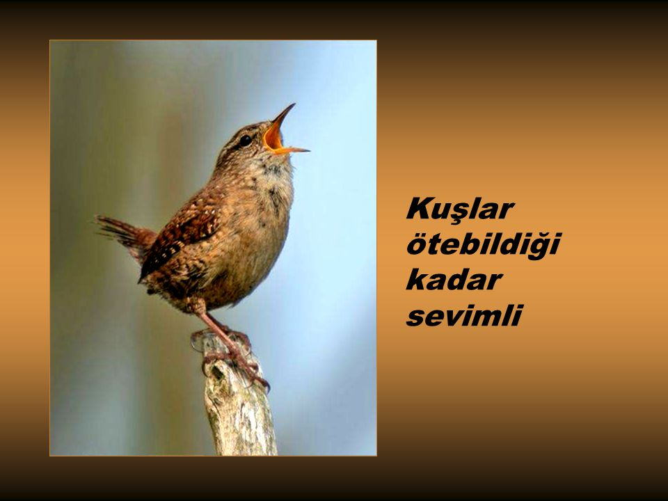 Kuşlar ötebildiği kadar sevimli