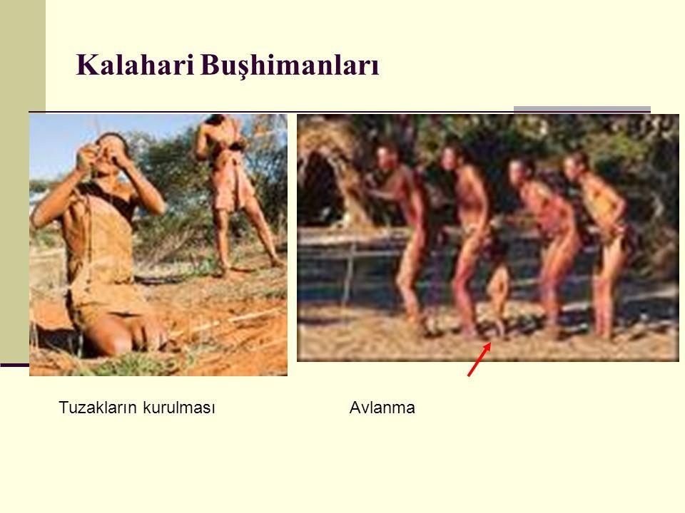 Kalahari Buşhimanları