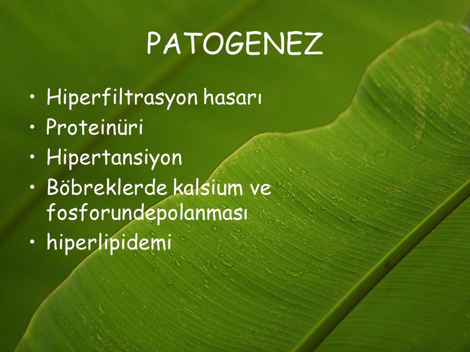 PATOGENEZ Hiperfiltrasyon hasarı Proteinüri Hipertansiyon